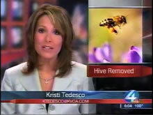 NBC Evening News-Tucson Bee Removal