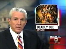 Nogales Man Dies in Bee Attack
